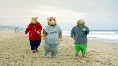 Kia hamsters running on a beach