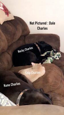 Angela Morse Pets