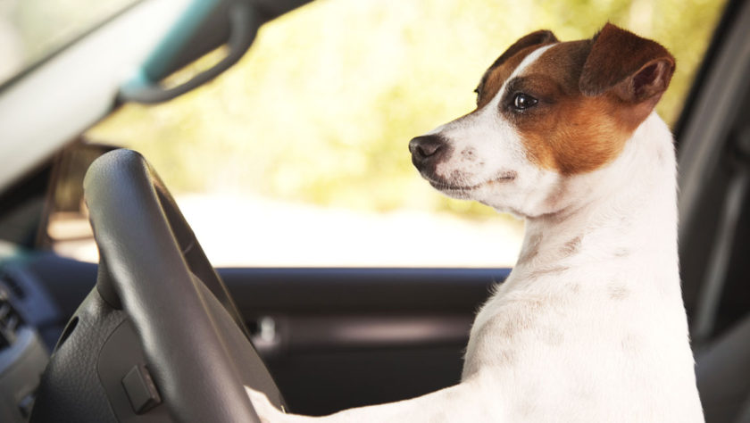 Edmunds Releases List of Top Cars for Pet Safety